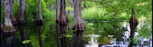 Lake Marion, South Carolina - Community and Visitors Guide